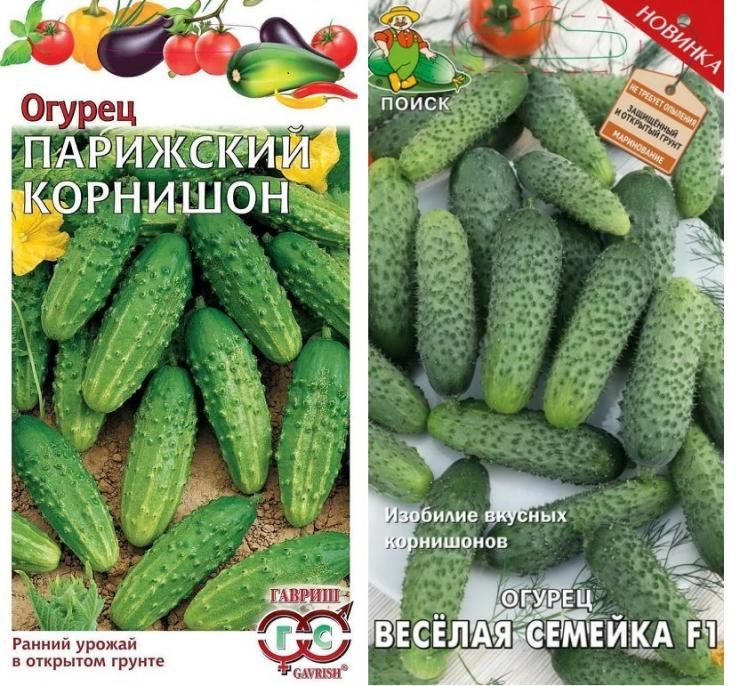 Описание лучших сортов огурцов корнишонов для открытого грунта и теплиц