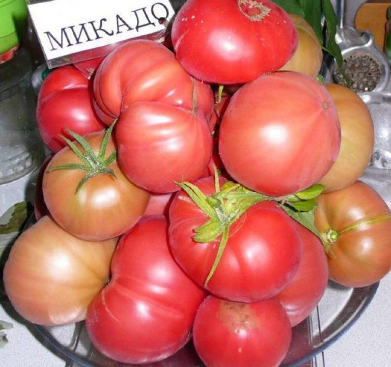 Томат микадо: описание сорта помидоров и фото русский фермер