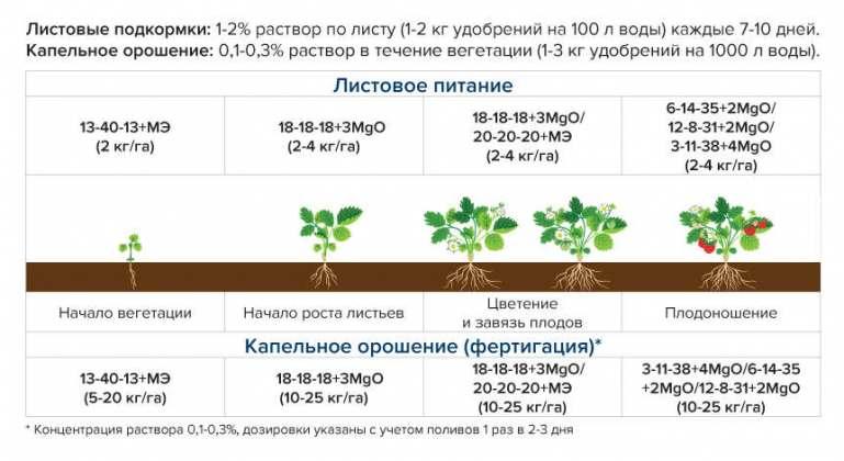 Правила подкормки разных плодовых деревьев в саду весной