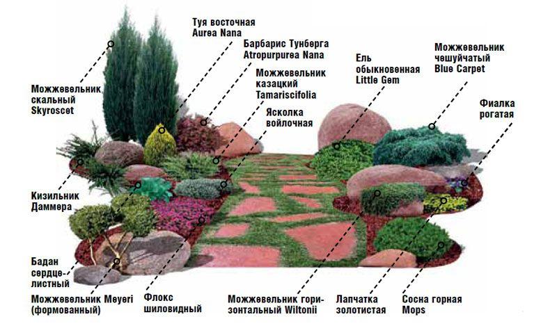 Композиция из деревьев и кустарников
