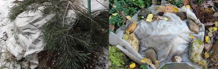 Хранение хризантем зимой: мультифлора и уход за ней в не сезон
