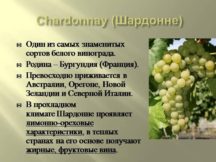 Описание сорта винограда аркадия и характеристика: правильная посадка, выращивание и уход за деревом с фото и видео