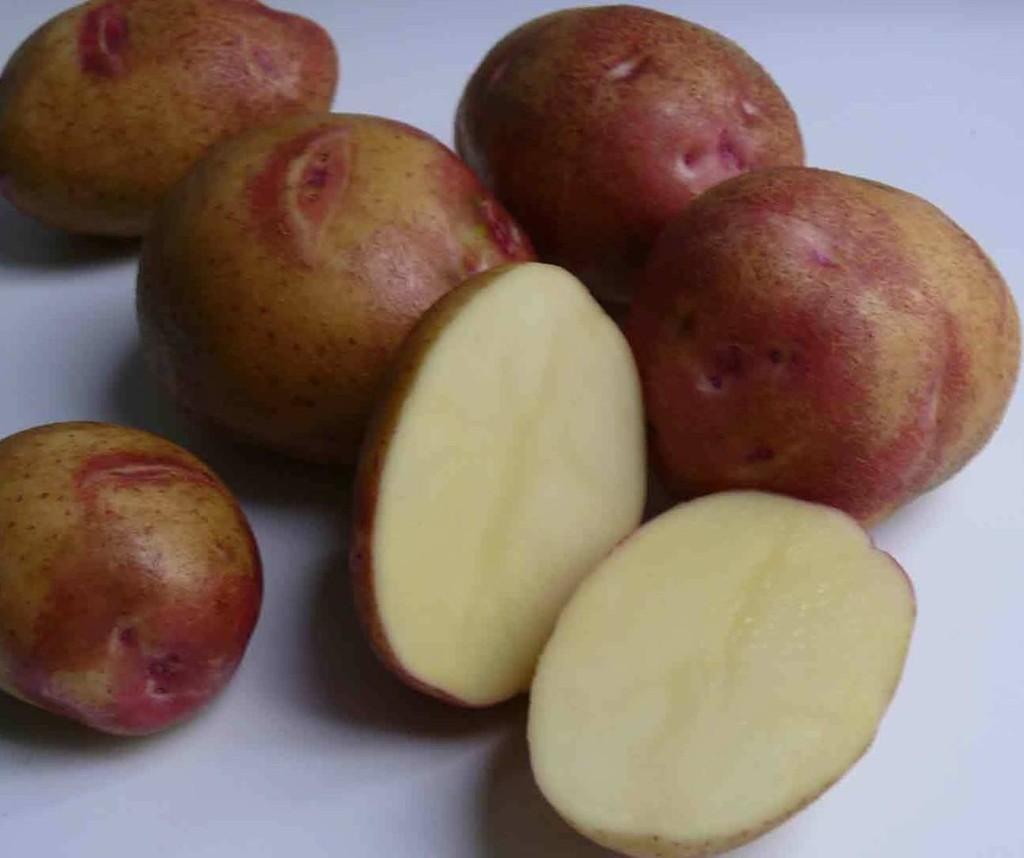 Сорт картофеля «иван да марья» – описание и фото