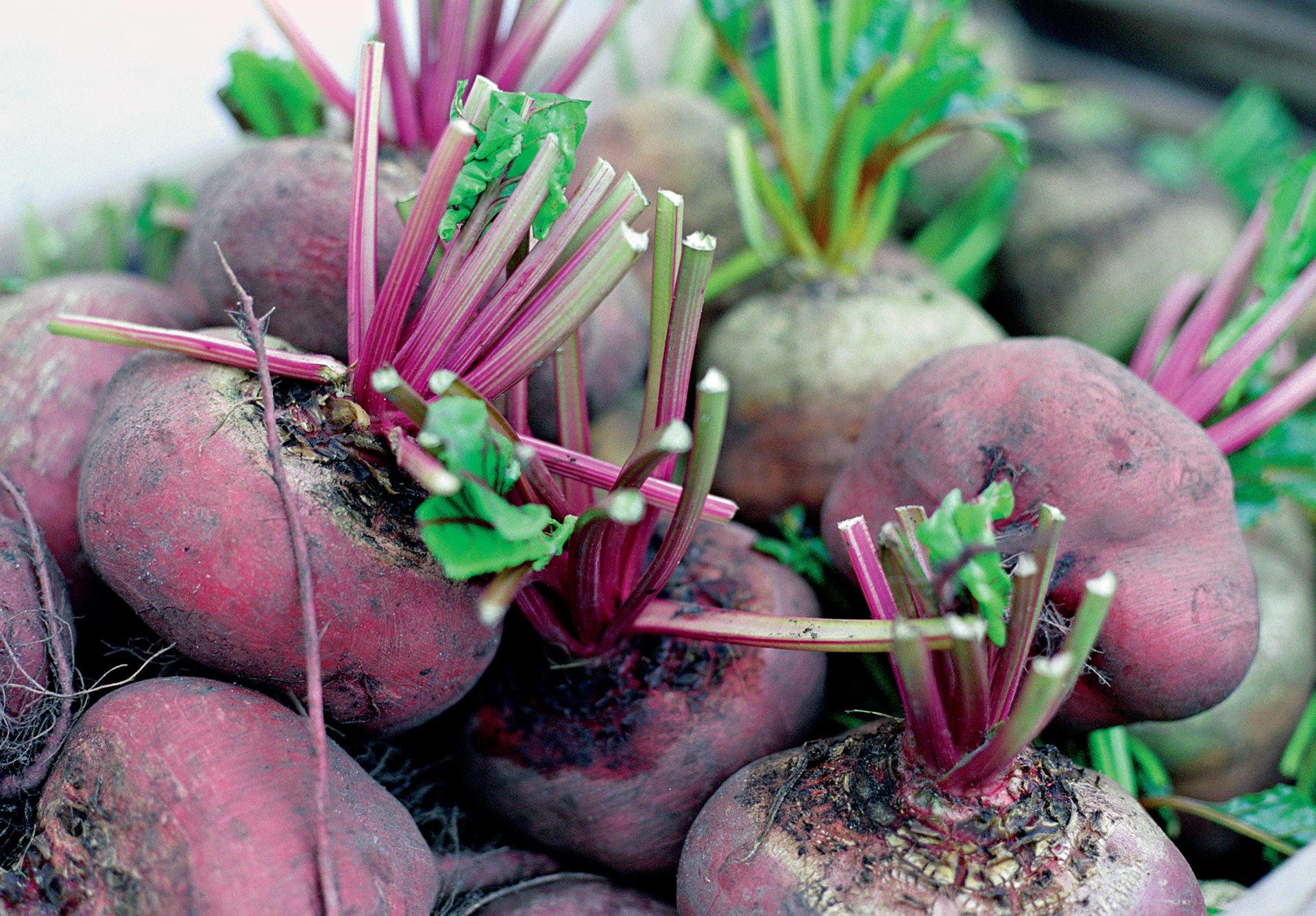 Когда убирать дайкон с грядки осенью, как выкапывать и хранить зимой урожай редьки, а также сроки и время работ в средней полосе, подмосковье и иных районах
