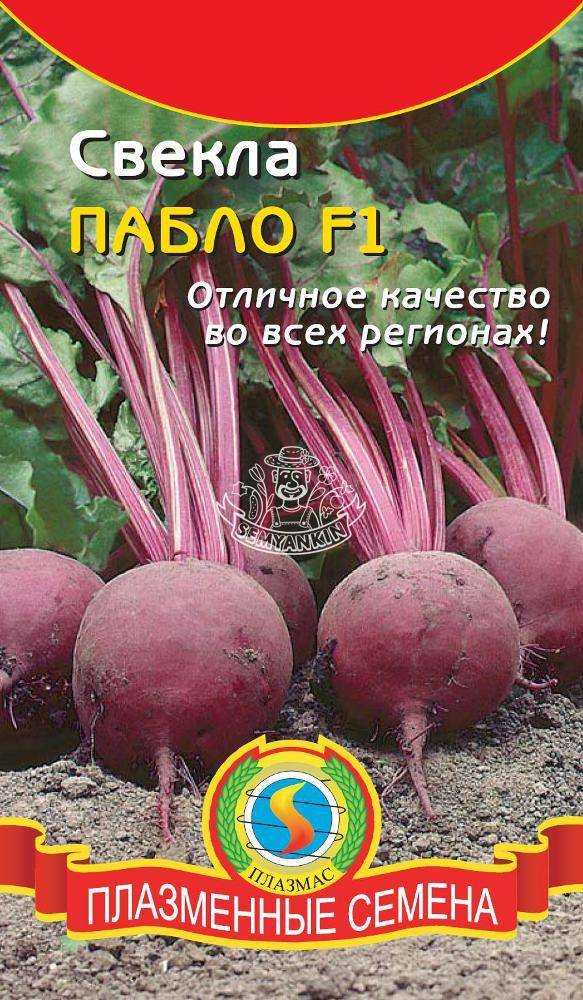 """Описание и выращивание свеклы """"пабло"""""""
