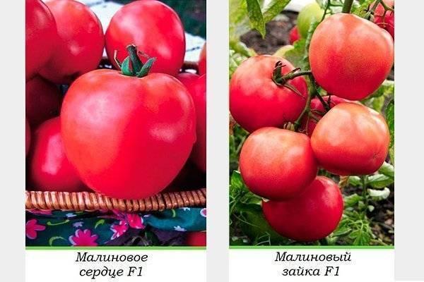 Томат малиновое чудо: отзывы огородников и пошаговая инструкция по выращиванию и получению обильного урожая