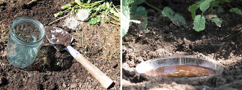 Топ-5 способов для борьбы с медведкой на огороде, садовом участке: действующие средства и профилактические меры   (фото & видео)
