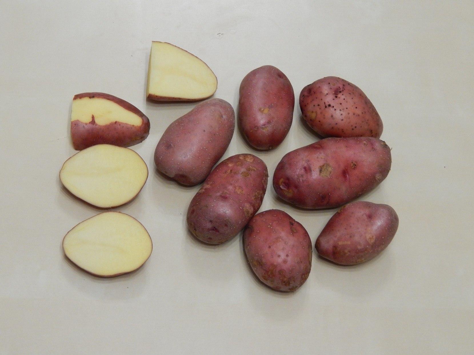 """Бесподобный картофель """"ажур"""" с подробным описанием сорта, наглядными фото и характеристикой русский фермер"""