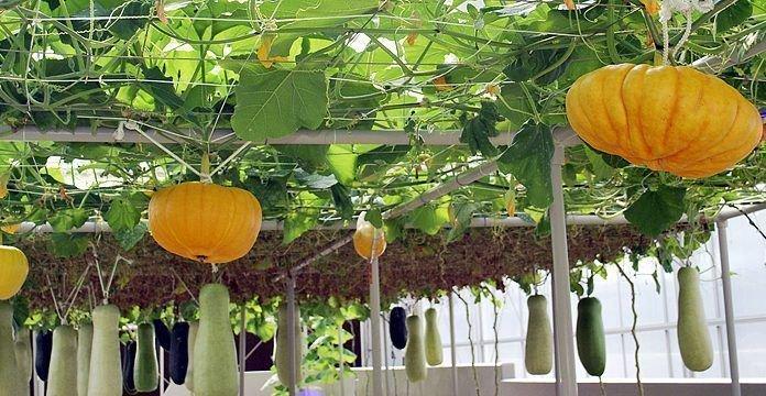 Когда и как сажать семена тыквы на рассаду в 2021 году