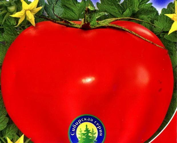 Томат бизнес леди: описание сорта, отзывы, фото | tomatland.ru
