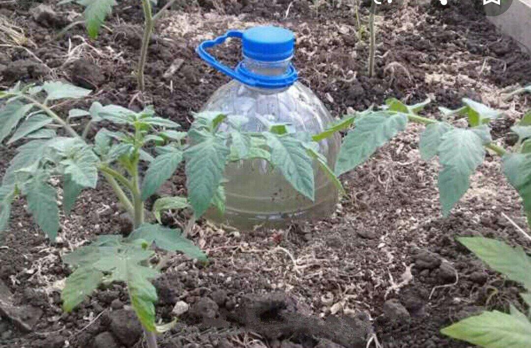 Капельный полив для огурцов из пластиковых бутылок своими руками с видео