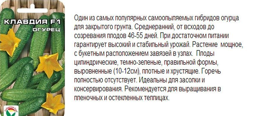 Что нужно знать о выращивании огурцов в ленинградской области