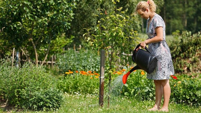 Сад полив деревьев, весна, лето, осень. полив плодовых деревьев, на разных почвах, по возрасту деревьев, нормы и виды полива.