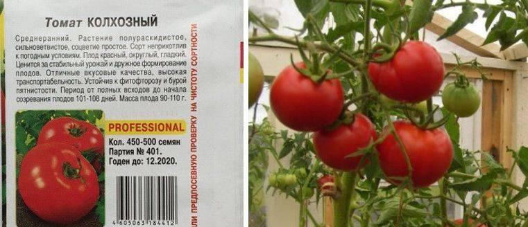 Описание томата Колхозный, подготовка семян и выращивание рассады