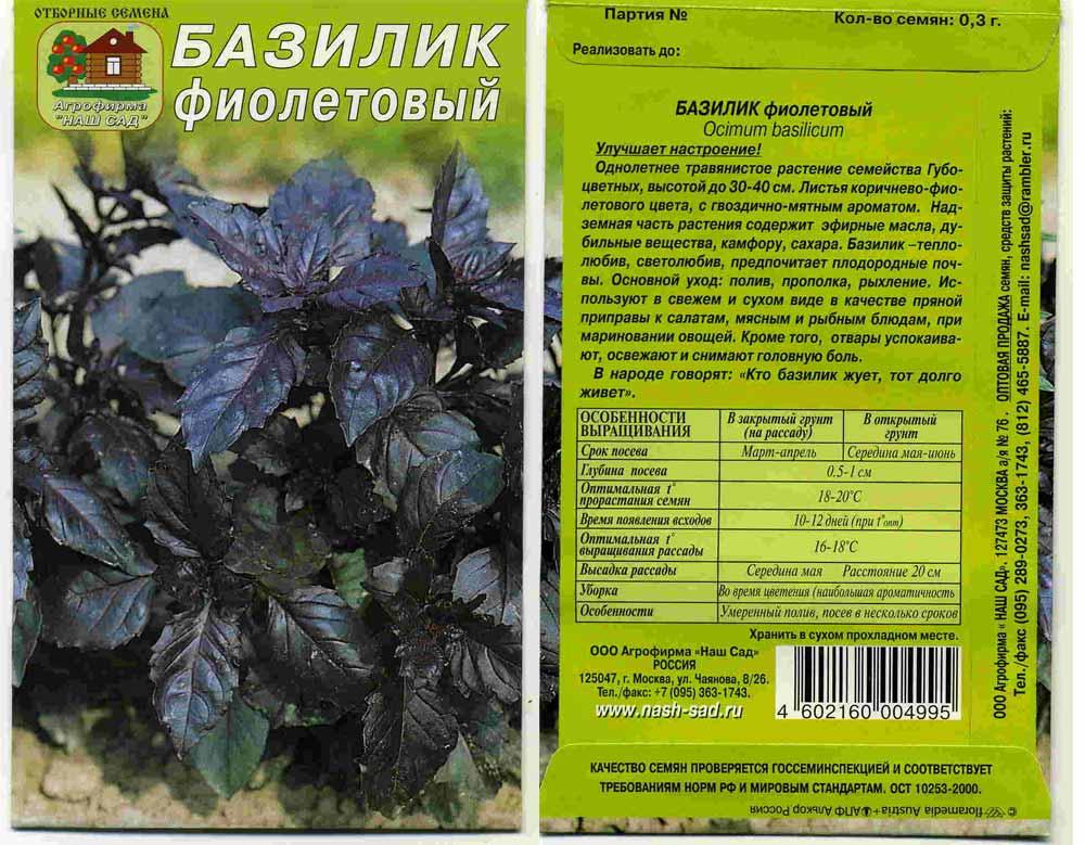 Базилик (реган): полезные свойства и противопоказания, виды (фиолетовый, зеленый), как употреблять в пищу, куда добавлять, чем заменить, как выглядит и как садить