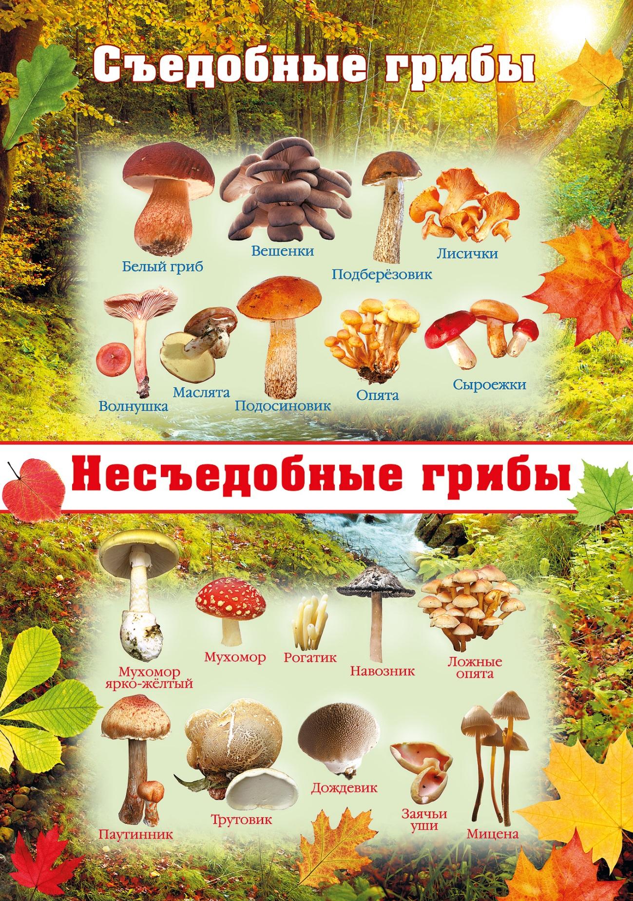 Какие съедобные грибы растут весной и летом: список, названия, фото. какие съедобные грибы появляются в мае, июне, июле, августе? как быстро растут съедобные грибы после дождя летом?
