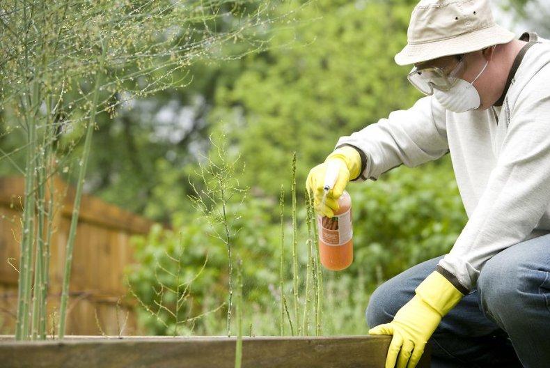 Защита древесины на дачном участке: виды защиты и основные требования