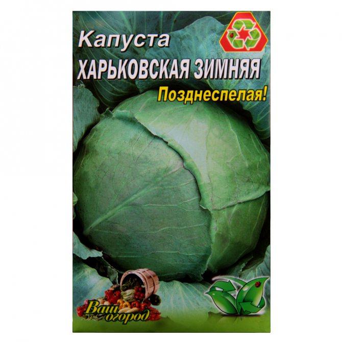 Описание сорта капусты харьковская зимняя, особенности выращивания и ухода