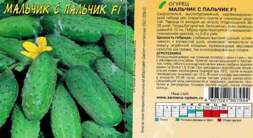 Высокопродуктивный и сочный сорт – огурец заначка f1: характеристика и ключевые особенности