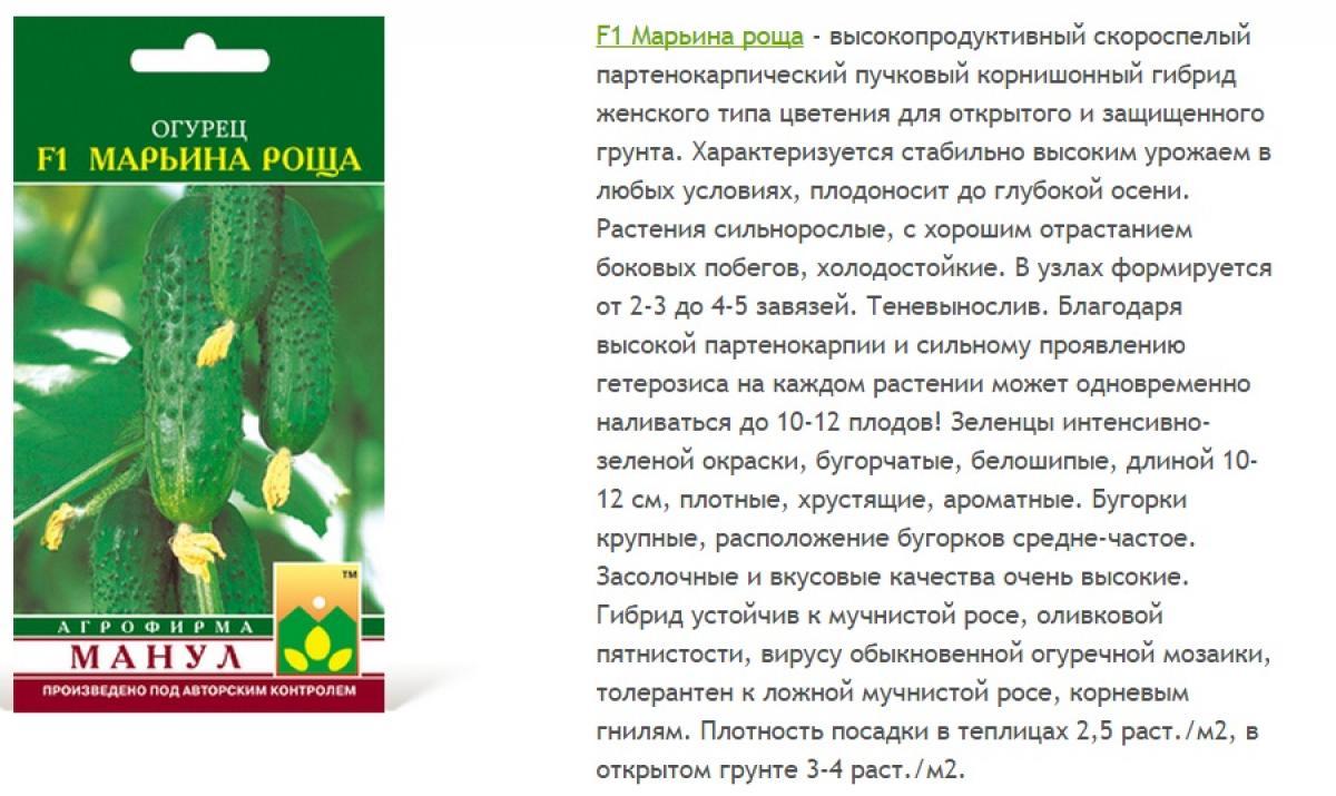 Огурцы марьина роща: описание сорта, сколько дают урожая, выращивание, фото