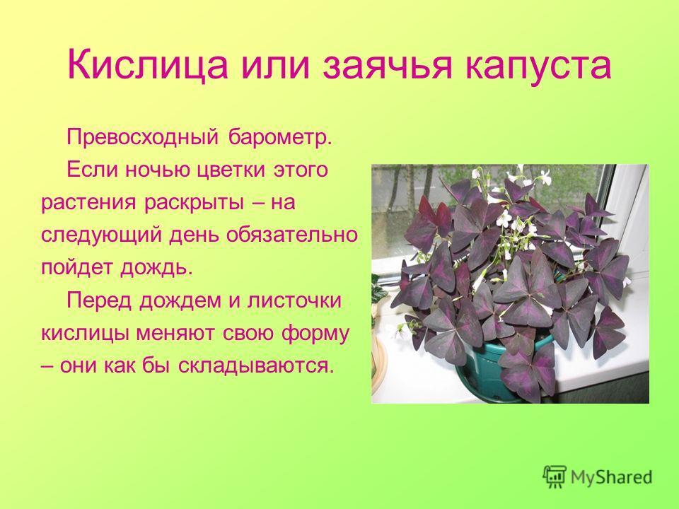 Фейхоа - полезные свойства, состав и противопоказания (+ 14 фото)