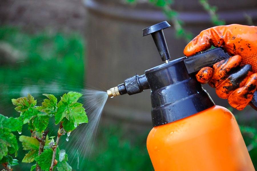 Народные средства для борьбы с вредителями сада и огорода