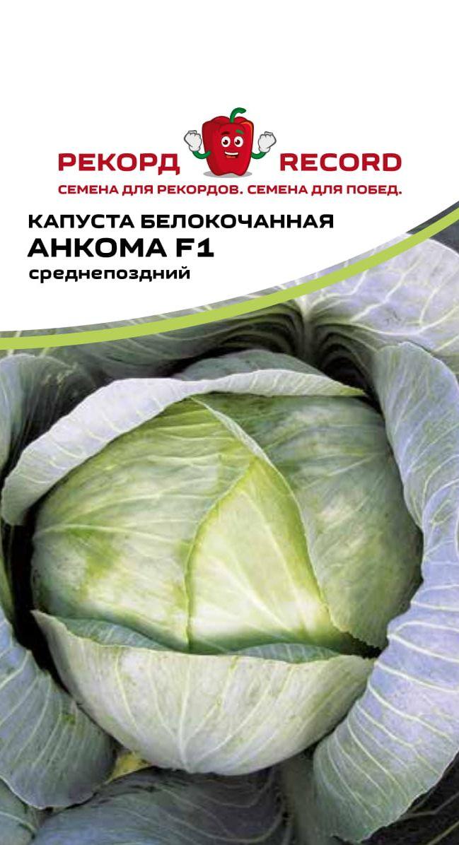 Капуста подарок: описание сорта, фото и отзывы садоводов, урожайность