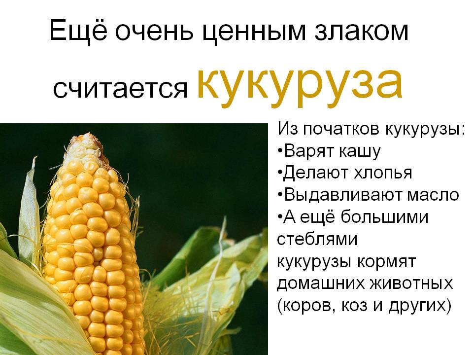 Кукуруза - польза и вред