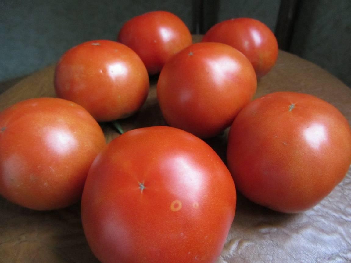 Томат оля f1: описание сорта, фото, отзывы дачников, выращивание, посадка и уход за помидорами, урожайность