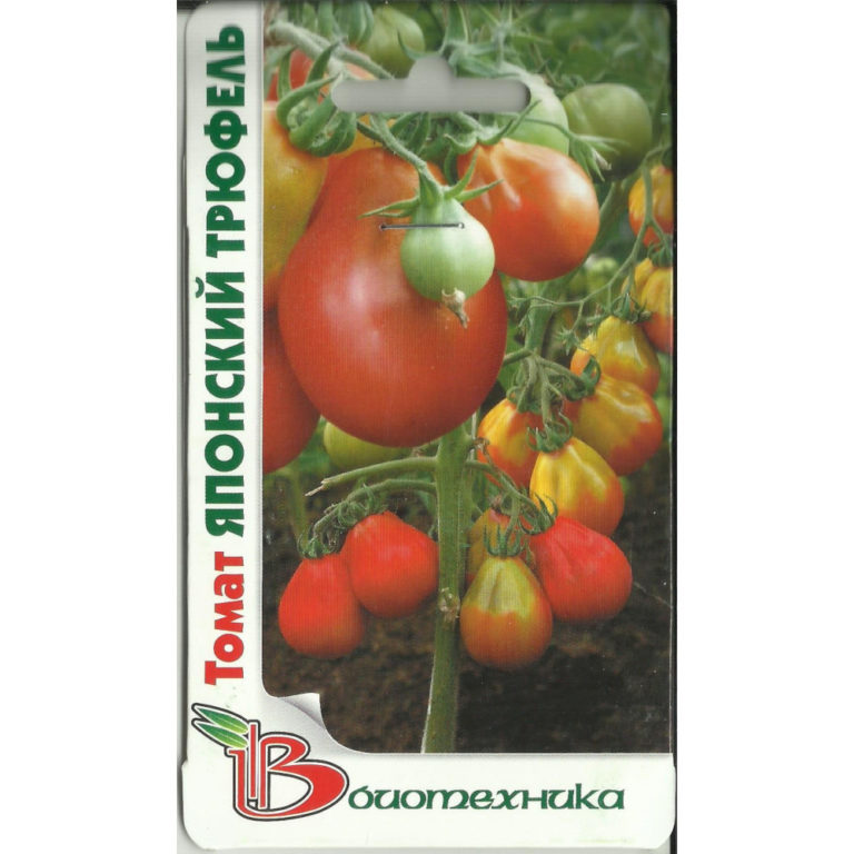 Описание томата необычной формы Лампочка и особенности выращивания сорта