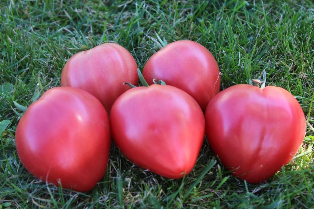 Томат золотое сердце: описание, отзывы, фото, урожайность   tomatland.ru