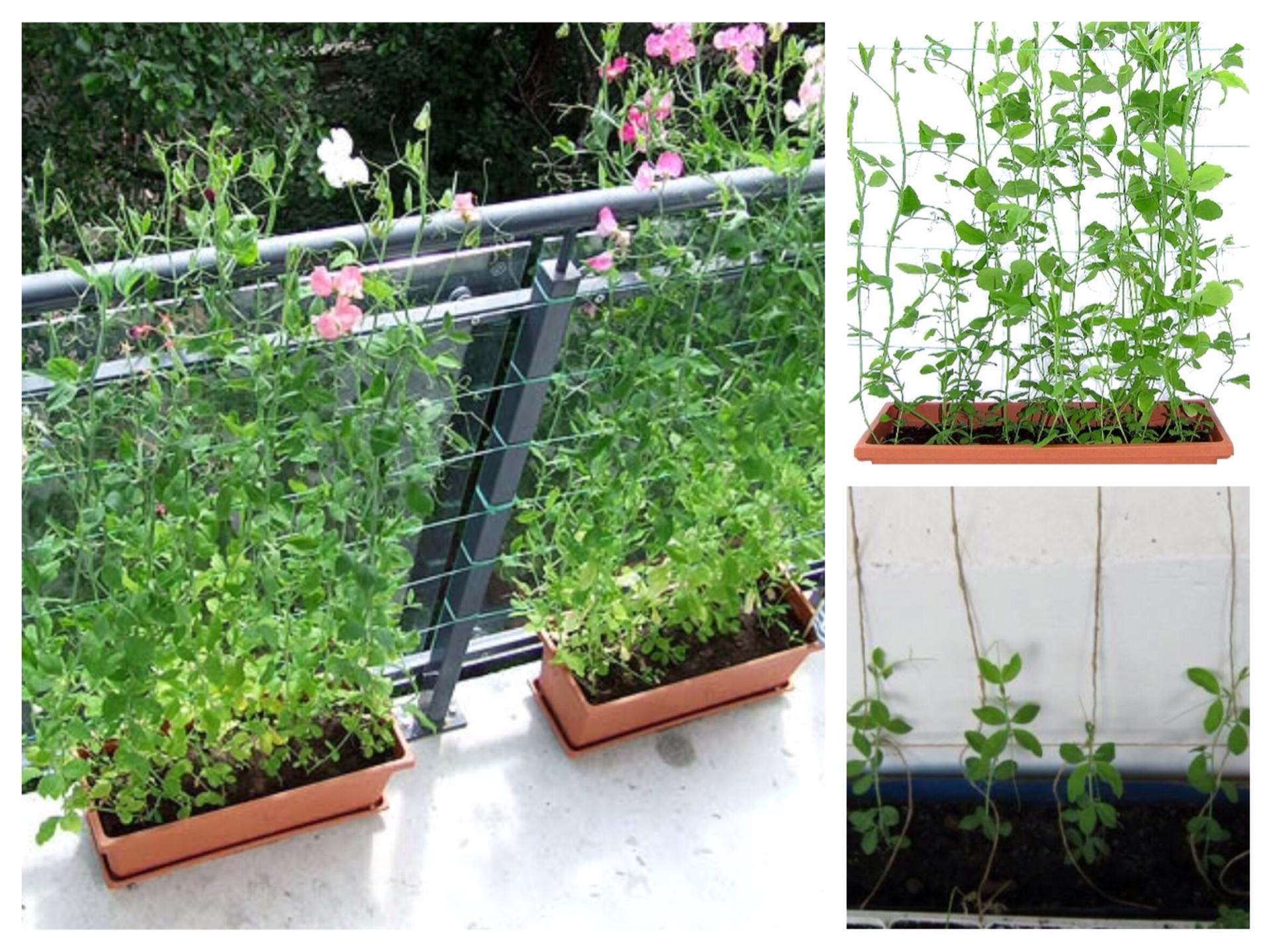 Огород на балконе - огород