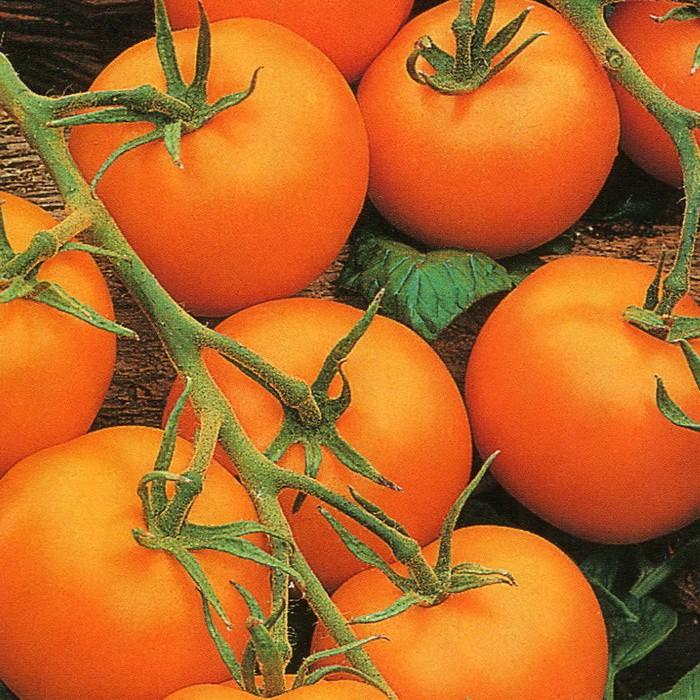 """ᐉ томат """"фламинго"""" f1: характеристика и описание сорта, рекомендации по выращиванию отличного урожая помидор и фото-материалы - orensad198.ru"""