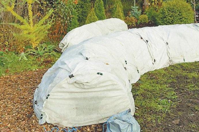 Подготовка пионов к зиме: время обрезки