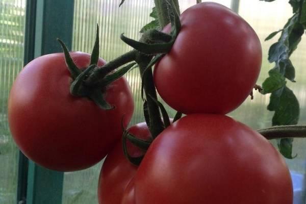 Лучшие сорта томатов для сибири и урала   tomatland.ru