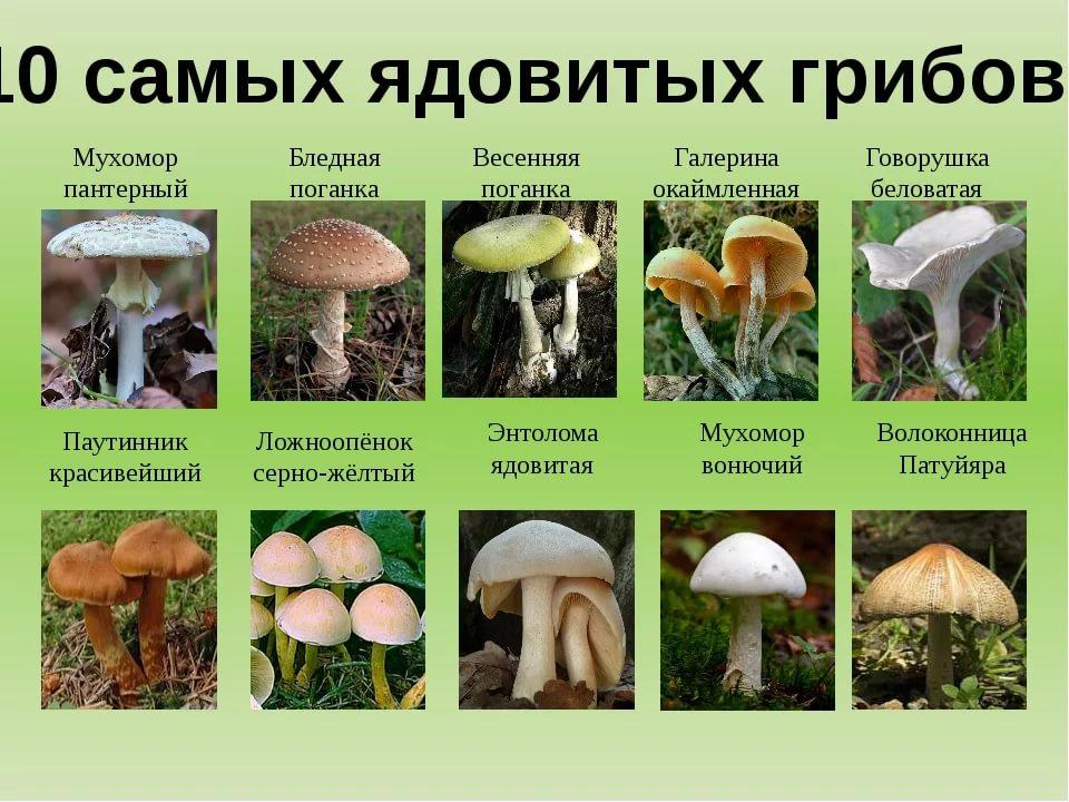 Какие грибы растут осенью в лесу (фото и описание)