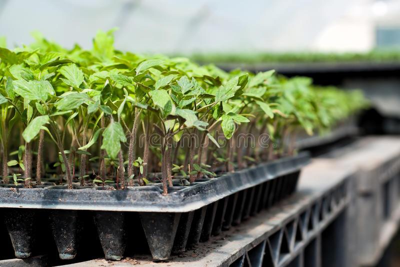 Как поливать семена после посадки: нужно ли, полив до и после посадки