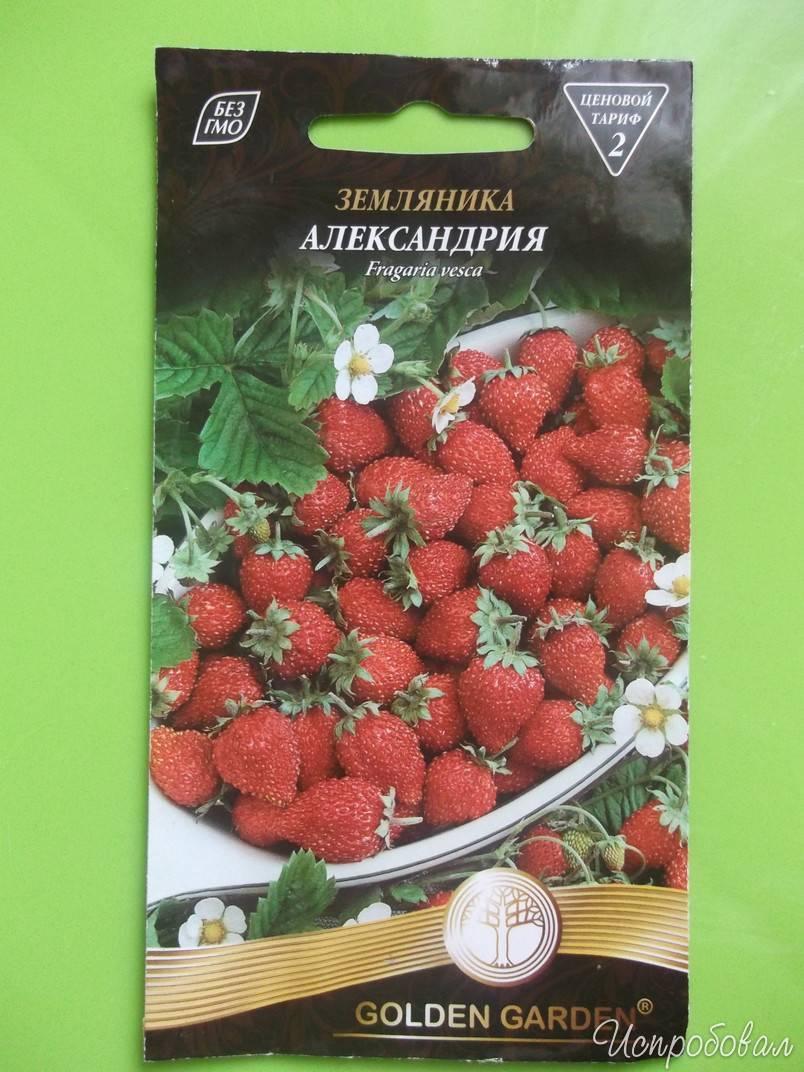 Клубника кама — описание сорта, фото и отзывы садоводов
