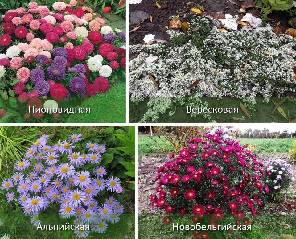 Астильба: посадка и уход в открытом грунте, особенности выращивания - sadovnikam.ru