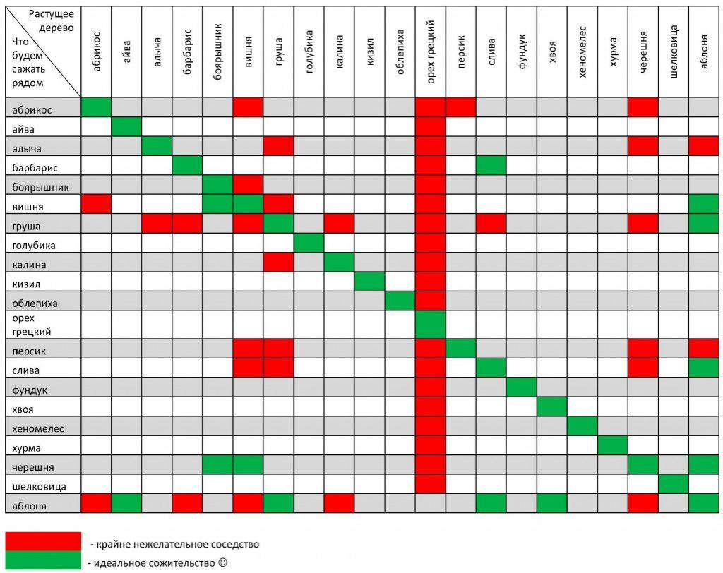Капуста июньская: описание, отзывы, фото и характеристика раннего сорта