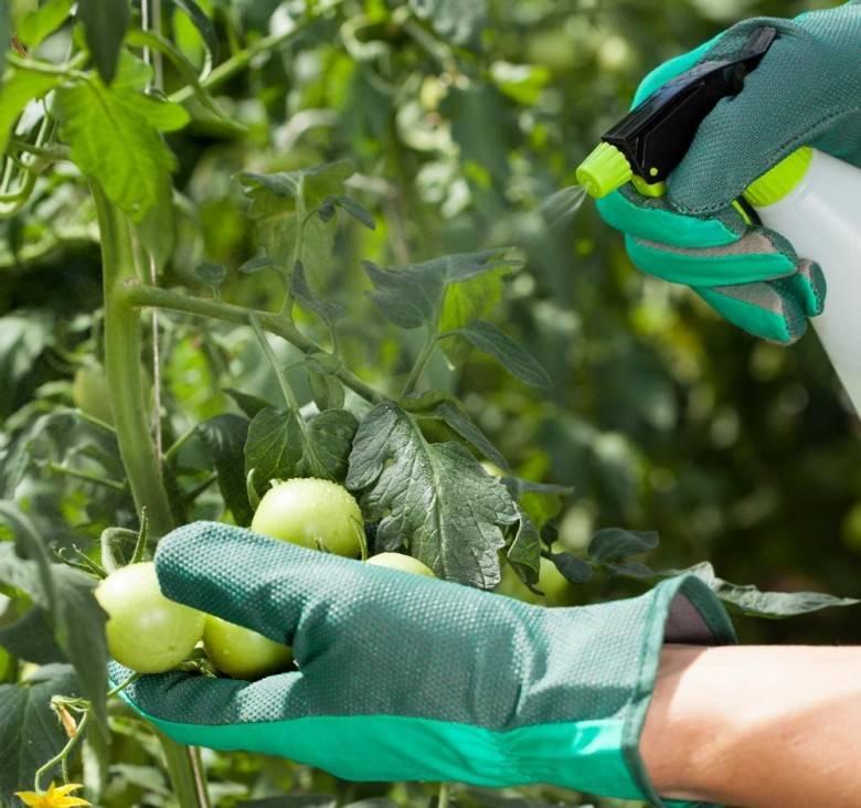 Борная кислота для помидоров и огурцов, опрыскивание как развести пропорции видео