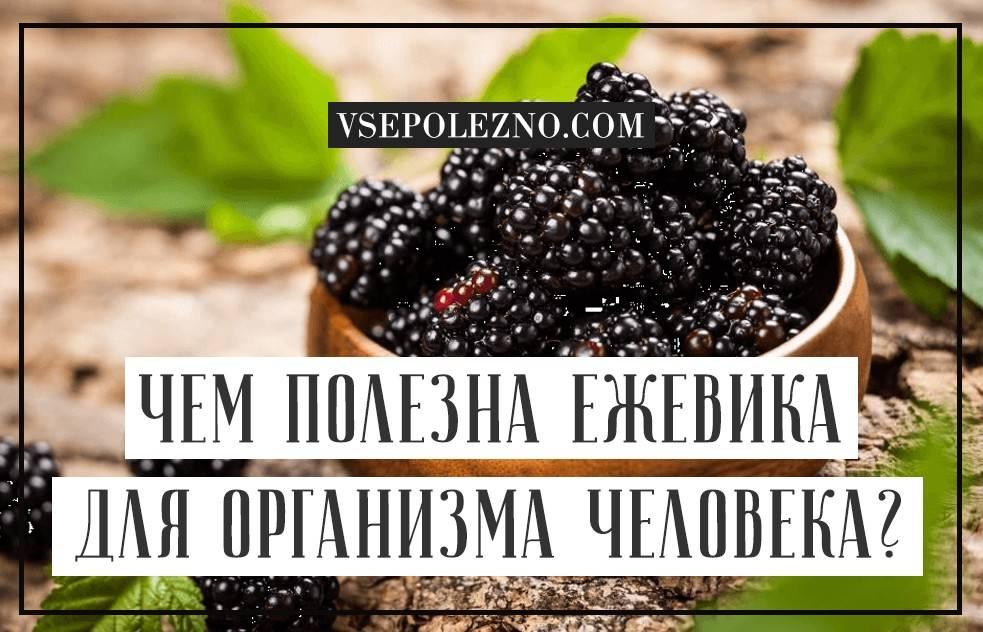 Крыжовник: польза и вред ягоды для здоровья, полезные свойства и противопоказания