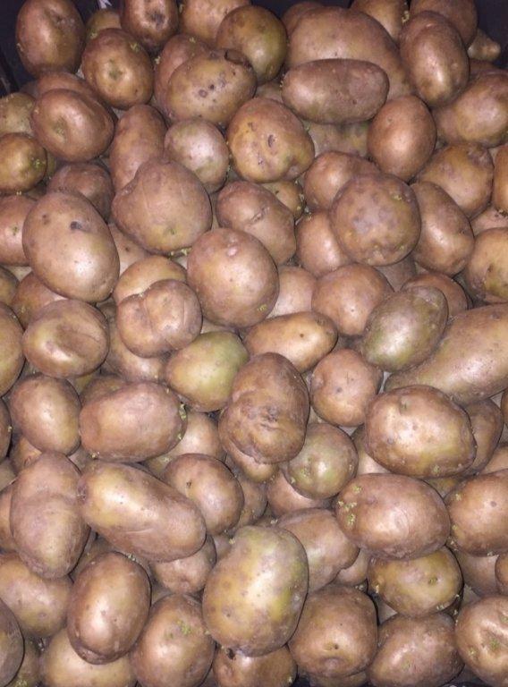 Сорт картофеля елизавета: характеристика, описание с фото, отзывы