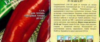 Томат этюд нк: характеристика и описание сорта, отзывы дачников с фото