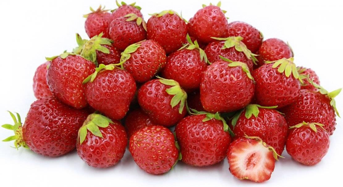 Клубника сорт мара де буа: когда хочется в лес по ягоды
