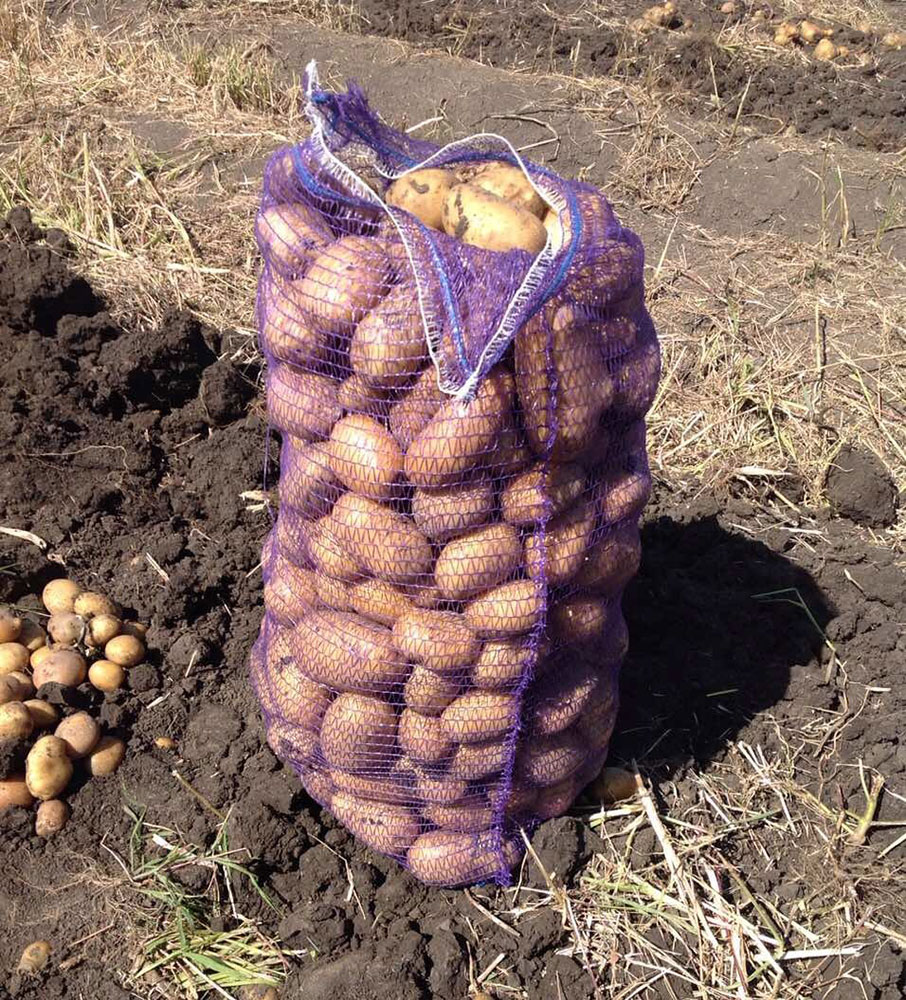 Сорт картофеля импала: описание и характеристика сорта с высокими вкусовыми качествами