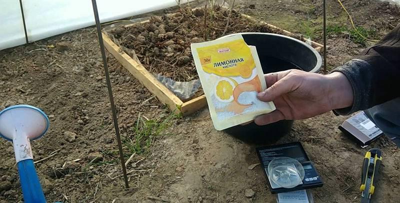 Как подкормить и какие удобрения лучше для голубики, подкисление почвы