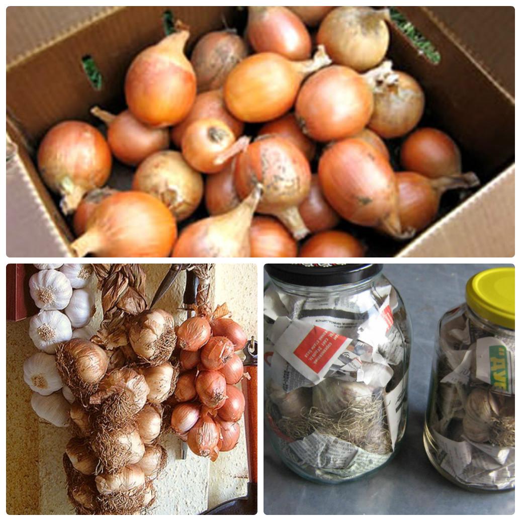 Как в домашних условиях хранить абрикосы, правила и лучшие способы