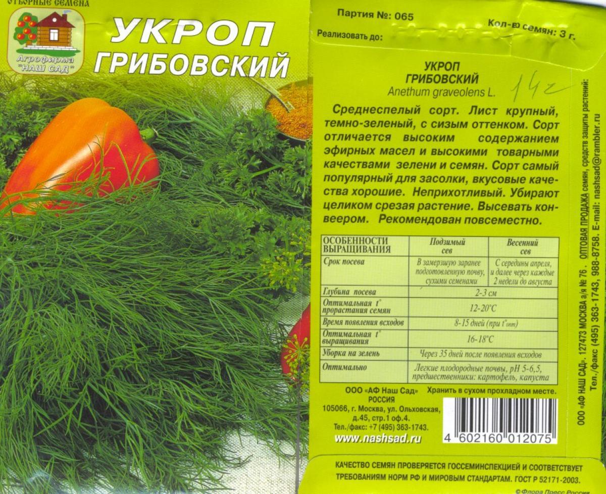 Укроп грибовский: характеристика и описание сорта, фото, отзывы, посадка и уход