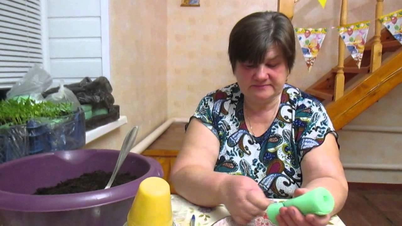 Рассада в улитке пеленке: выращивание дома